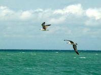Сентября принято отмечать Всемирный день моря (World Sea Day), к.